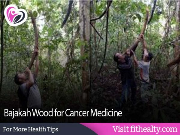 The Facts Behind the Efficacy of the Wood that Can Cure Cancer, Life in the Forest and is Considered a Mystical Plant