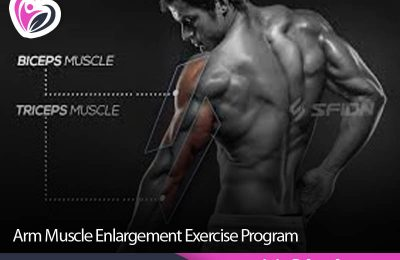 Arm Muscle Enlargement Exercise Program
