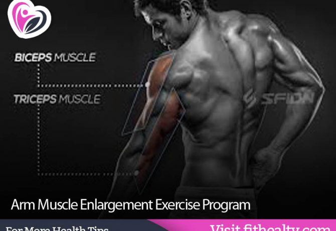 Arm Muscle Enlargement Exercise Program